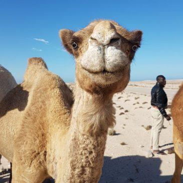 KM 5741 – Einreise Mauretanien