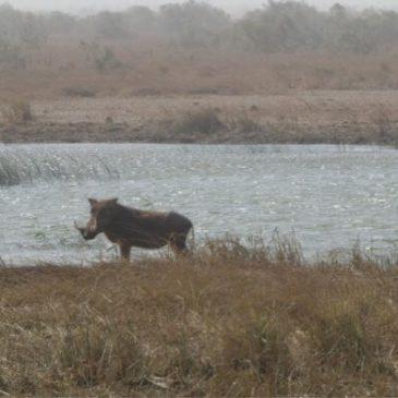 KM 6557 – südliches Mauretanien – Nouakchott / Saint-Louis