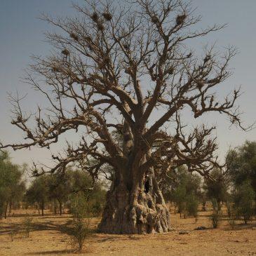 KM 7139 – durch den Sahel zum Gambia River – Saint-Louis / Banjul