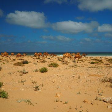 KM 5353 – Marokkos Küste – Akhfennir / Dakhla
